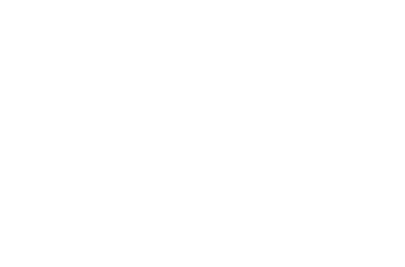 Minimoto-pitbike